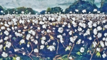 North Carolina artist J. Chris Wilson's Landscape Painting <em>Cotton Field at Cool Spring, Twilight</em> see also &quot;From Murphy to Manteo--An Artist's Scenic Journey&quot;