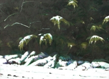 North Carolina artist J. Chris Wilson's Landscape Painting <em>Snow on Cedars</em> see also &quot;From Murphy to Manteo--An Artist's Scenic Journey&quot;